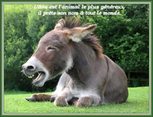 Humour nature images anes et chevaux - Animaux humoristiques ...