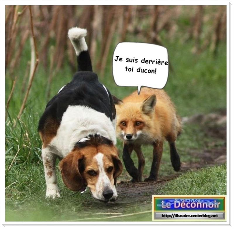 Humour nature images chiens et autres animaux - Animaux humoristiques ...