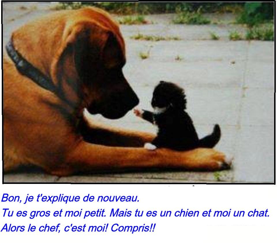 photo drole chien et chat