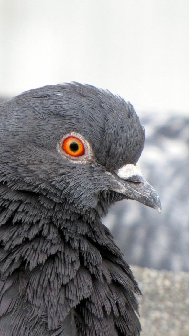 oiseaux gers des graines du gers pour les petits oiseaux gascogasco st aunix lengros gers et. Black Bedroom Furniture Sets. Home Design Ideas